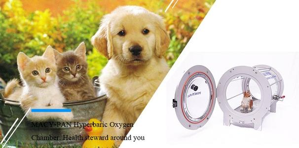 Animal Hyperbaric Oxygen Chamber for sale