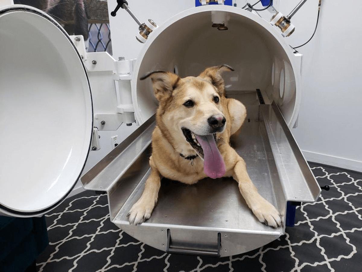 Household Hyperbaric Chamber cost: (best home hyperbaric chamber)