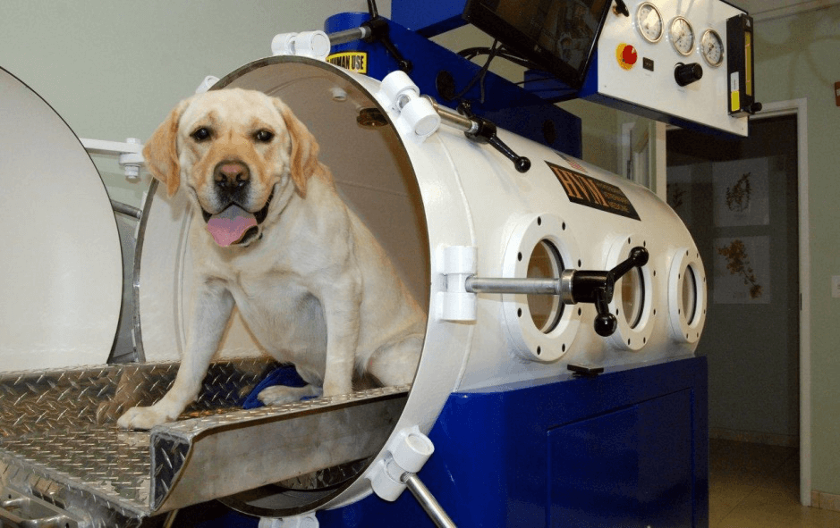 Which is the best Veterinary Hyperbaric Oxygen Chamber in 2020?